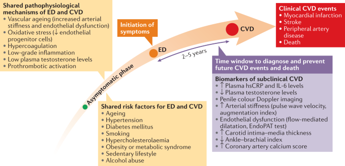 Interactions between erectile dysfunction, cardiovascular disease and cardiovascular drugs - Nature Reviews Cardiology