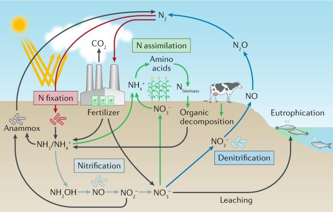 reversing nitrogen fixation nature reviews chemistry