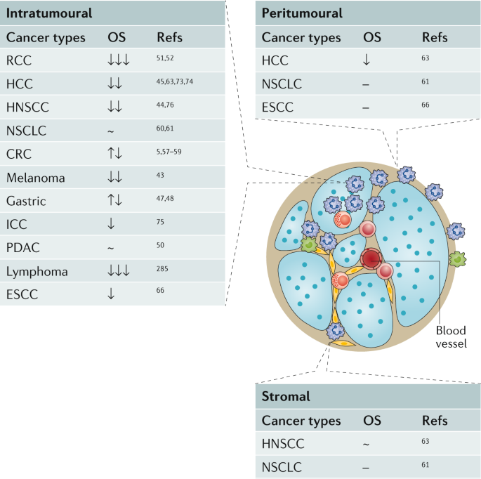 Tumour-associated neutrophils in patients with cancer