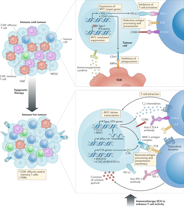 The emerging role of epigenetic therapeutics in immuno-oncology