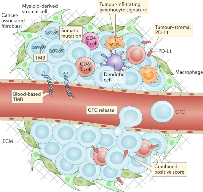 Immunotherapeutic approaches for small-cell lung cancer