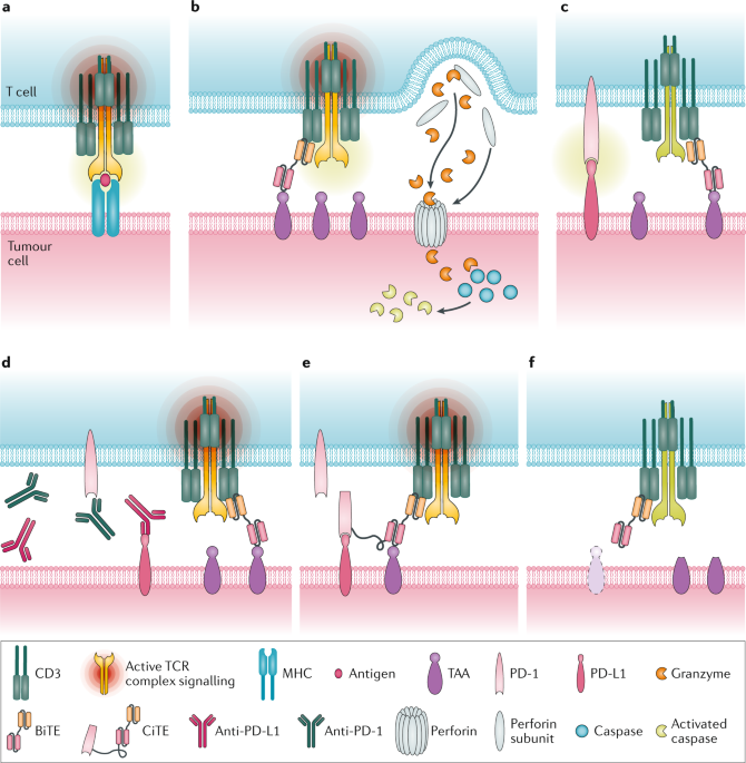 T cell-engaging therapies — BiTEs and beyond