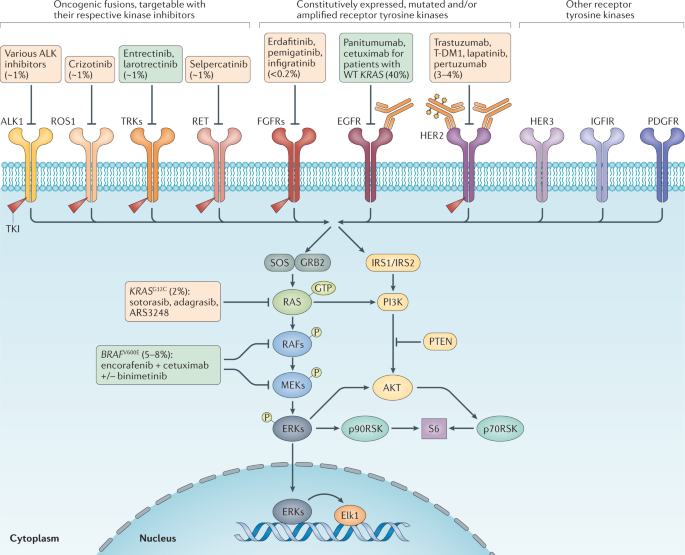 Precision oncology in metastatic colorectal cancer — from biology to medicine
