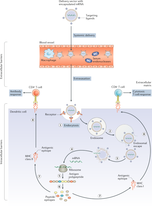 Delivery technologies for cancer immunotherapy | Nature