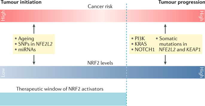 Therapeutic targeting of the NRF2 and KEAP1 partnership in