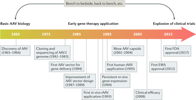 Adeno-associated virus vector as a platform for gene therapy