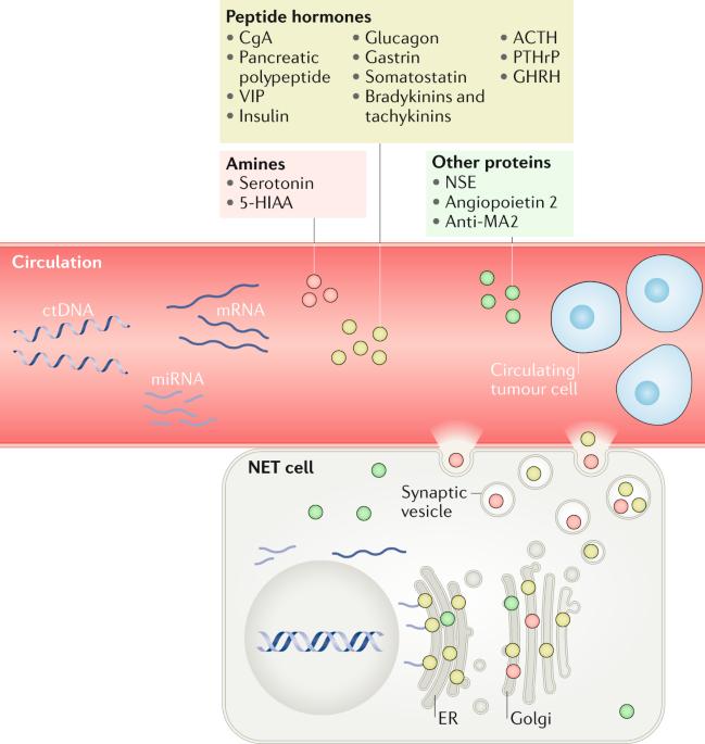 Neuroendocrine cancer means, Neuroendocrine cancer xenograft. Specificații