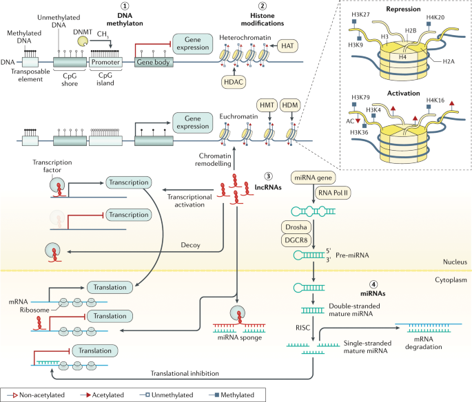 Epigenetics Of Colorectal Cancer Biomarker And Therapeutic Potential Nature Reviews Gastroenterology Hepatology