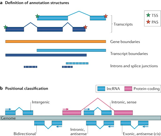 Towards A Complete Map Of The Human Long Non Coding Rna