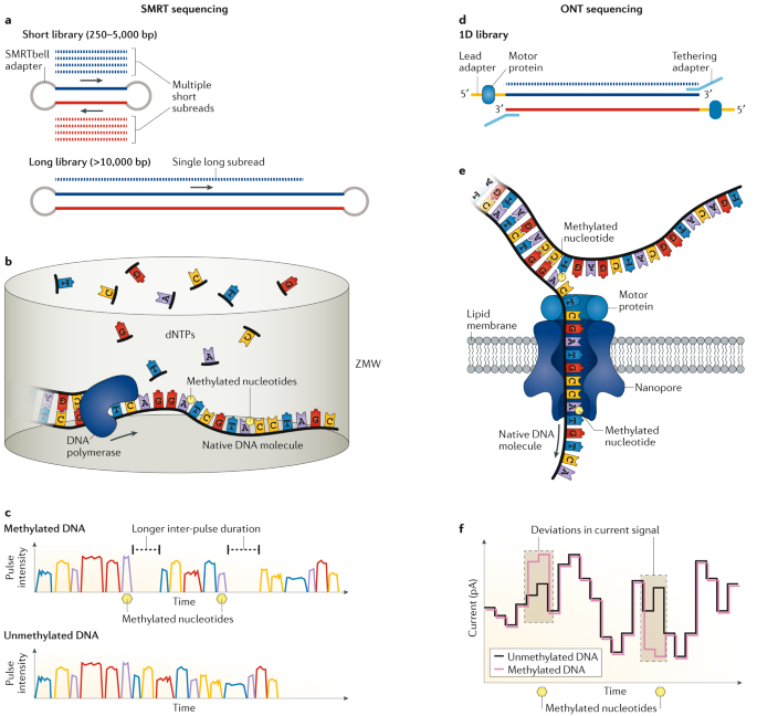 Deciphering bacterial epigenomes using modern sequencing