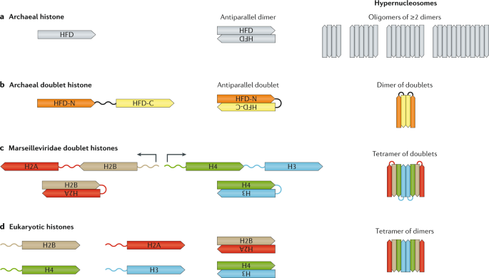 QnA VBage Old cogs, new tricks: the evolution of gene expression in a chromatin context