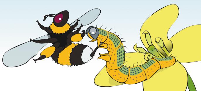 Bug battles end in compromise