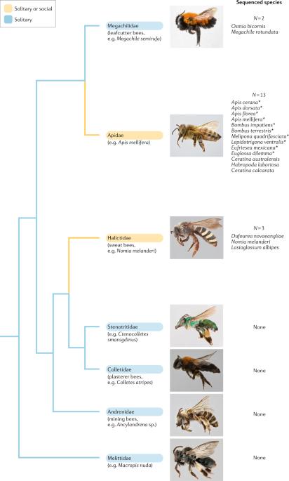 Improving bee health through genomics