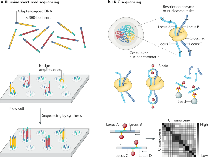 Long-read human genome sequencing and its applications