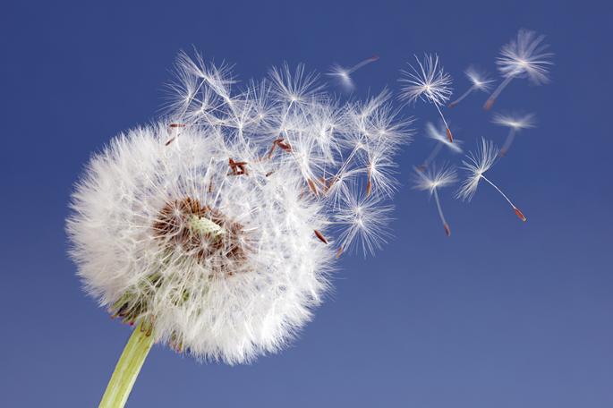 Scientific seeds of inspiration