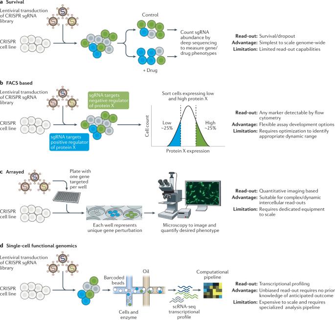 A new era in functional genomics screens - Nature Reviews Genetics