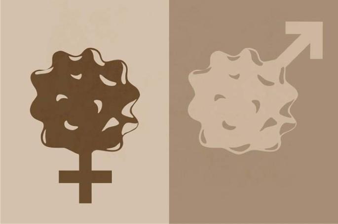 Peritoneal sex differences