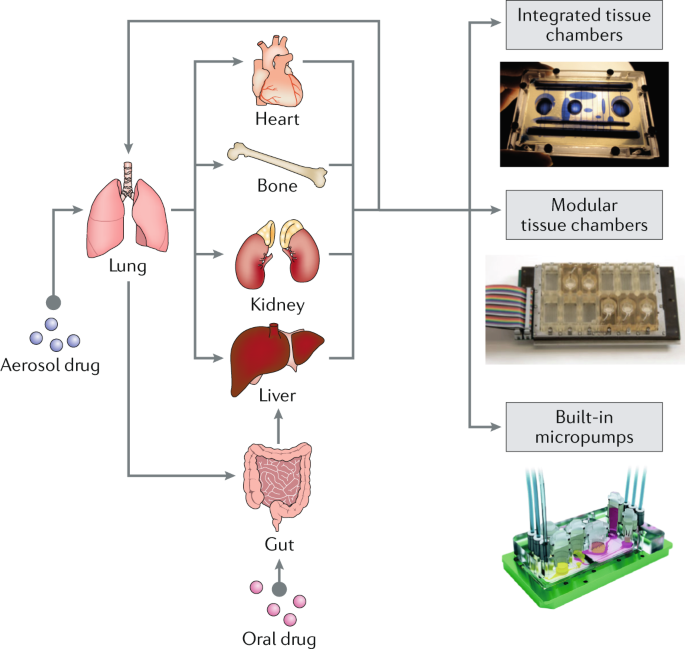 Advances In Organ On A Chip Engineering Nature Reviews Materials