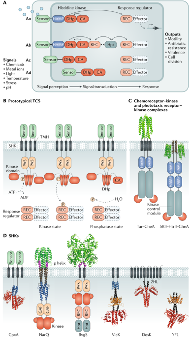 Structural Insights Into The Signalling Mechanisms Of Two Component