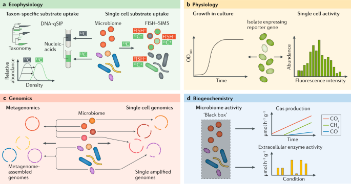 Next-generation physiology approaches to study microbiome function at single cell level