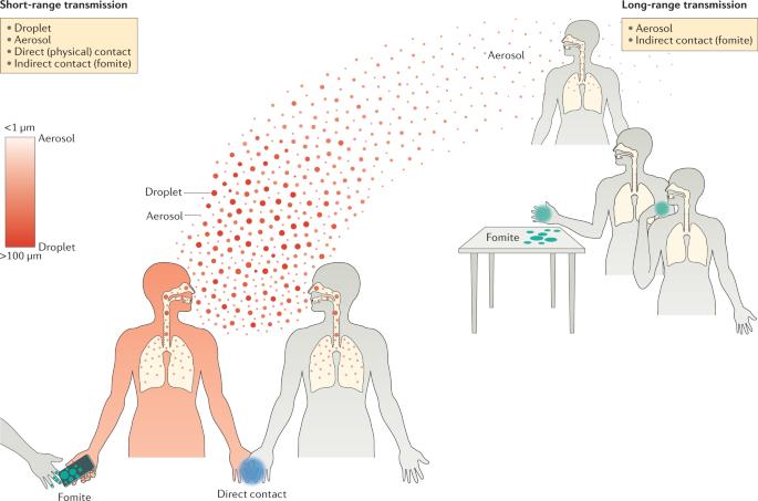 Transmissibility and transmission of respiratory viruses