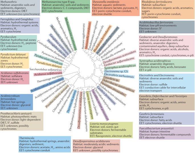 Electromicrobiology: the ecophysiology of phylogenetically diverse electroactive microorganisms - Nature Reviews Microbiology