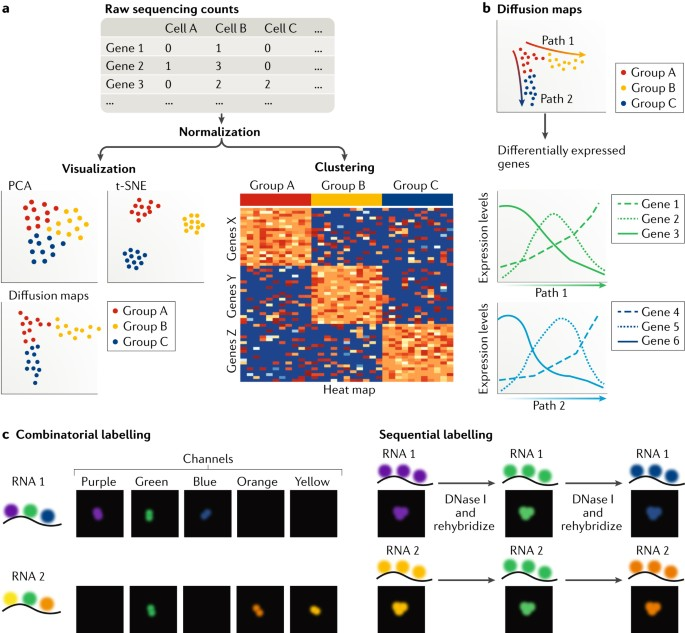 Single-cell transcriptional profiling: a window into
