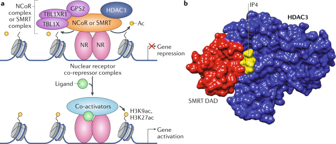Integrative regulation of physiology by histone deacetylase