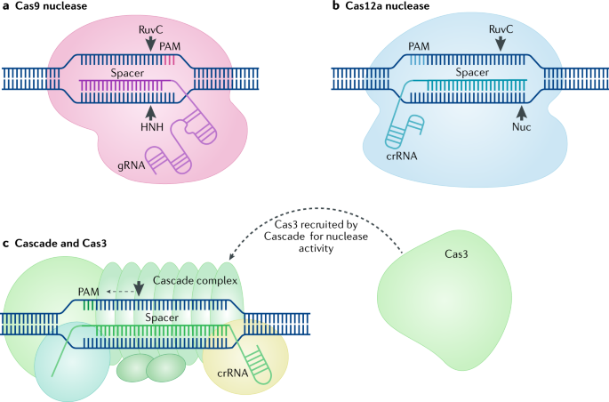 The next generation of CRISPR–Cas technologies and applications ...