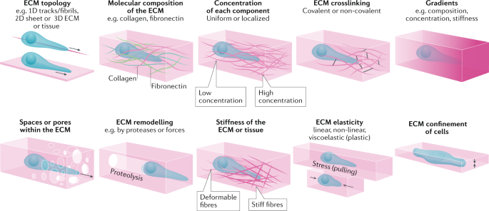 Mechanisms of 3D cell migration