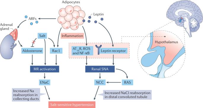 Kidney and epigenetic mechanisms of salt-sensitive hypertension