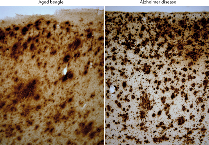 A cross-species approach to disorders affecting brain and