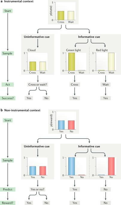 Towards a neuroscience of active sampling and curiosity