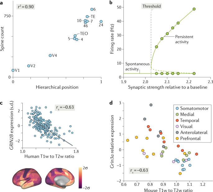 Macroscopic gradients of synaptic excitation and inhibition in the neocortex