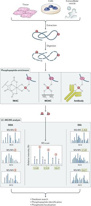 molecular exploitation of apoptosis pathways in prostate cancer kyprianou natasha
