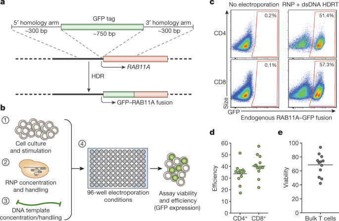 Reprogramming human T cell function and specificity with non