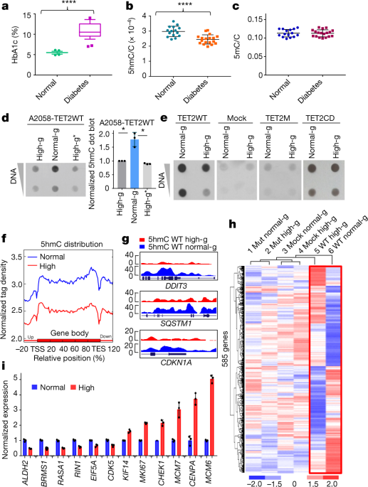 nature.com - Glucose-regulated phosphorylation of TET2 by AMPK reveals a pathway linking diabetes to cancer