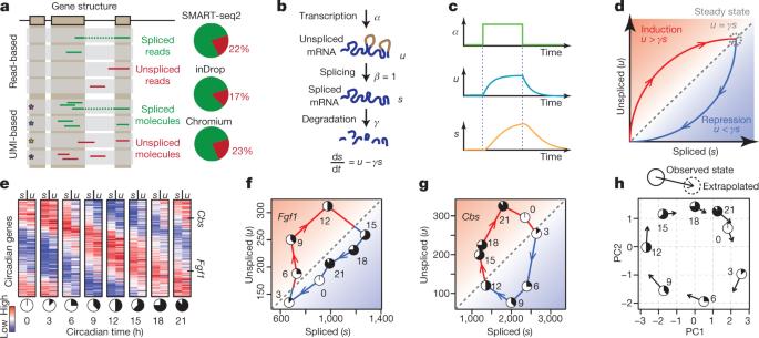RNA velocity of single cells