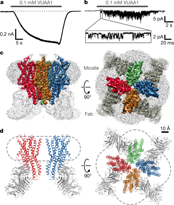 Cryo Em Structure Of The Insect Olfactory Receptor Orco Nature