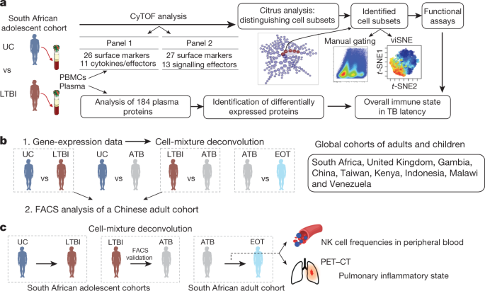 A multi-cohort study of the immune factors associated with M. tuberculosis infection outcomes