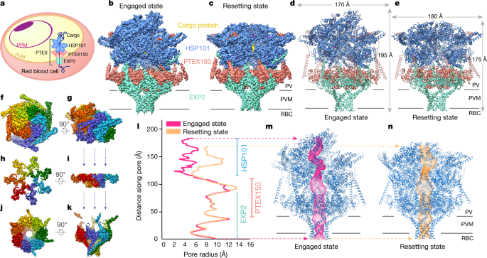 Malaria parasite translocon structure and mechanism of