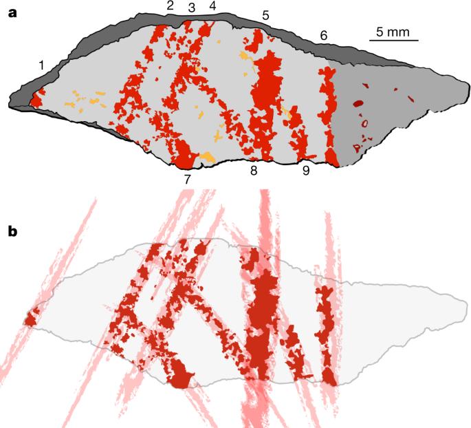 Interpretación de las líneas identificadas en la pieza L13 de Blombos Cave (Sudáfrica). Foto: Nature.