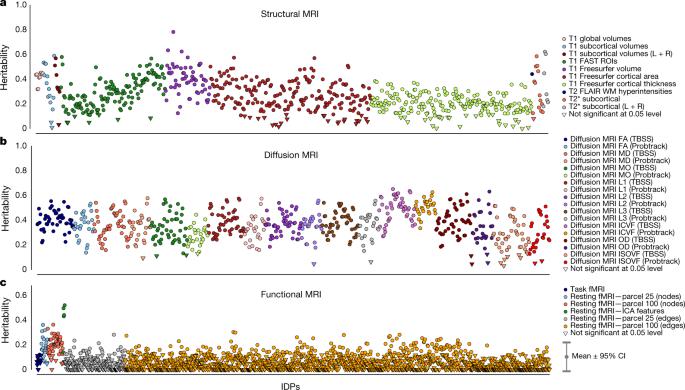Genome-wide association studies of brain imaging phenotypes