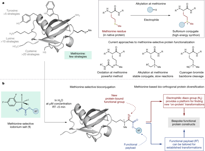 a protein functionalization platform based on selective reactions at