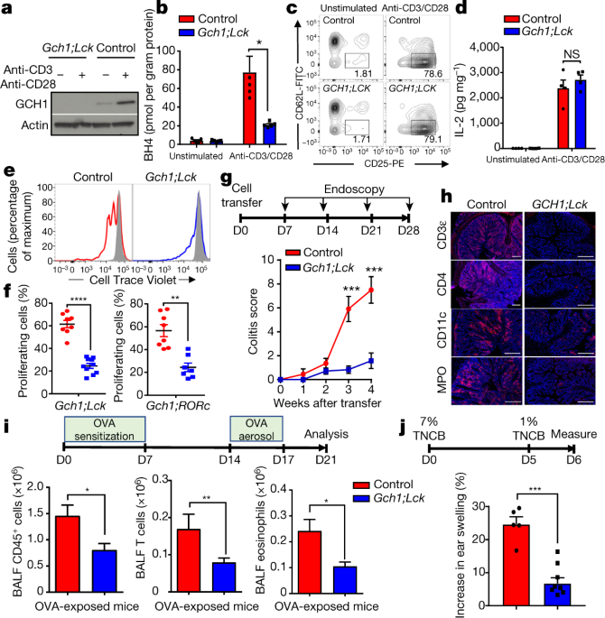 the metabolite bh4 controls t cell proliferation in autoimmunity and sniper nitrous systems diagram a, immunoblot of gch1 after 24 hours of tcr stimulation with anti cd3 cd28 antibodies in cd4 t cells experiment repeated three times with similar results