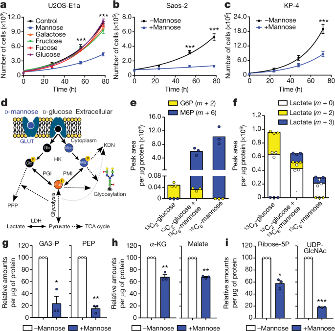 Mannose impairs tumour growth and enhances chemotherapy | Nature