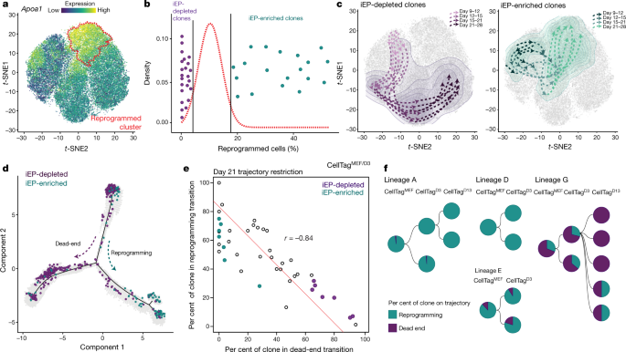 Single-cell mapping of lineage and identity in direct reprogramming ...