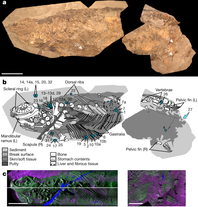 Soft-tissue evidence for homeothermy and crypsis in a Jurassic ichthyosaur