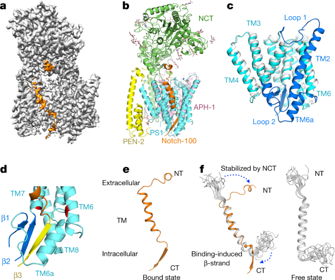 QnA VBage Structural basis of Notch recognition by human γ-secretase