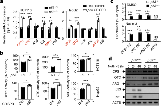 p53 regulation of ammonia metabolism through urea cycle controls